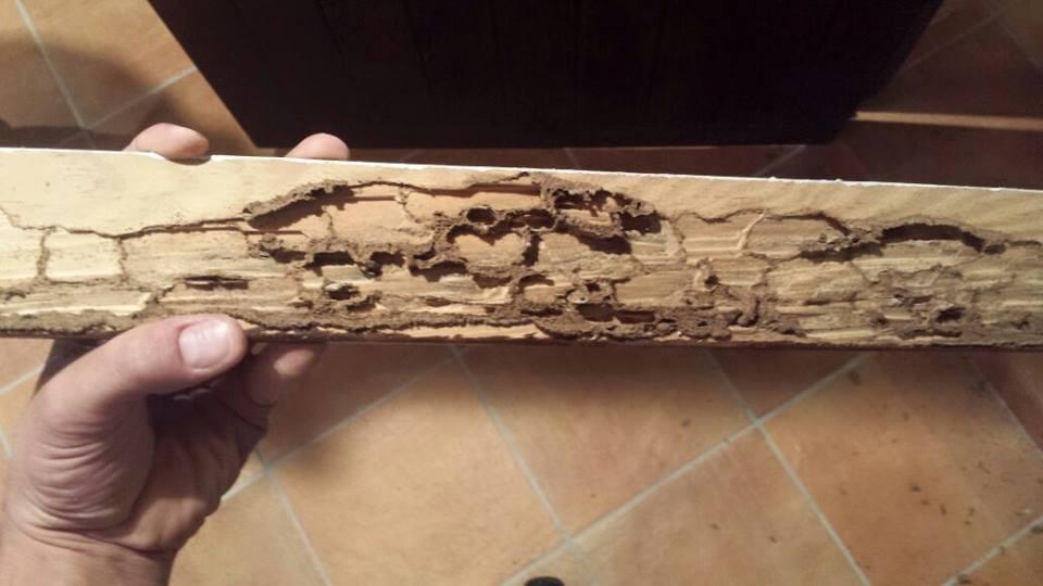 Tratamiento de termita y carcoma desinfecciones for Carcoma de la madera